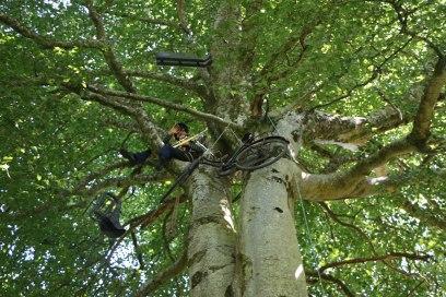 matty-n-trees-copy